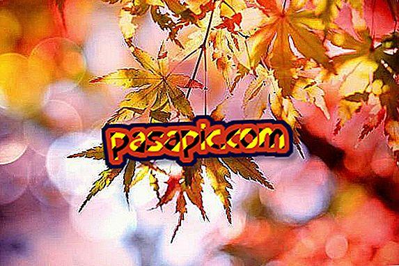 Kas yra rudens lygiadienis ir kaip ji švenčiama?