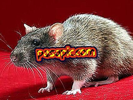 ماذا يعني أن تحلم الفئران
