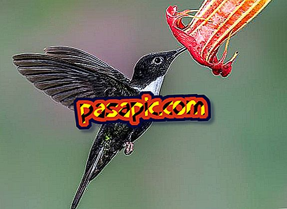 Makna hummingbird sebagai haiwan berkuasa