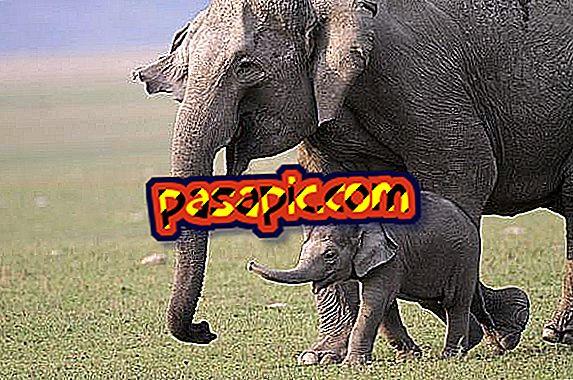 Betydningen av elefanten som et kraftdyr