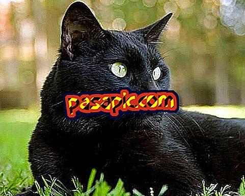 Apa artinya bermimpi tentang kucing