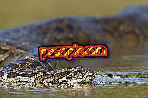How is the anaconda physically - the animal world