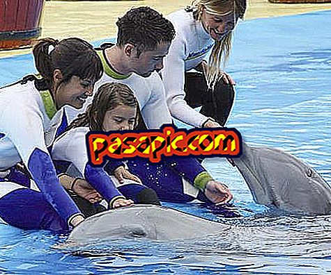 How to bathe with dolphins in Spain - the animal world