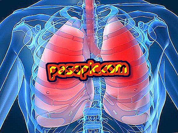 Kakšna je funkcija pljuč