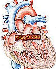 Trái tim hoạt động như thế nào