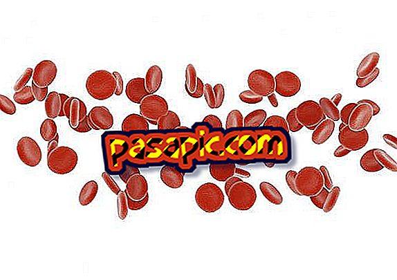ما هي وظيفة خلايا الدم الحمراء