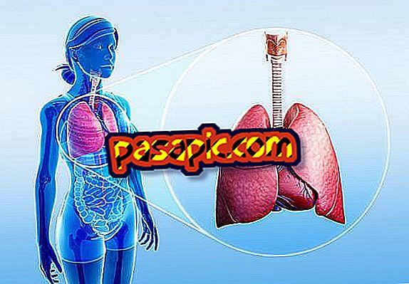 Funkcije dišnog sustava