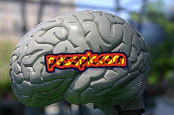 Come il nostro cervello cattura ciò che leggiamo - formazione