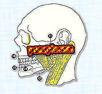 Salivary glands - Function and what they are