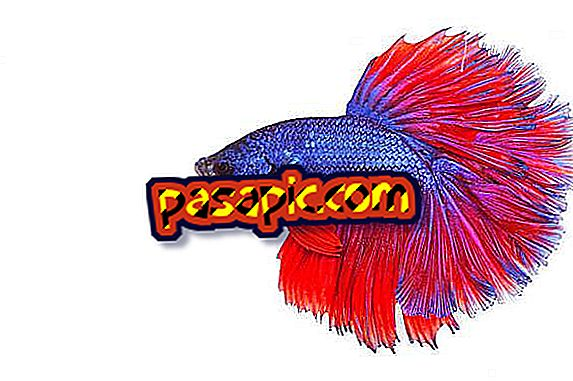 क्यों मेरी मछली को एक आँख याद आ रही है