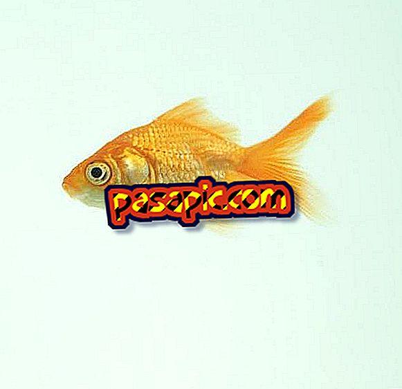 मछली को नए घरों में कैसे अभ्यस्त करें