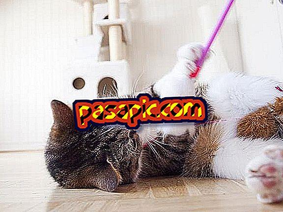 Quels sont les meilleurs jouets pour les chats