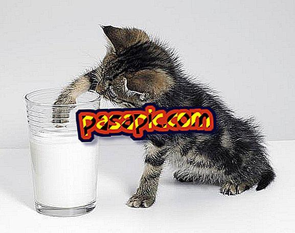 Kas ma saan oma kassile piima anda?  - Siin on vastus