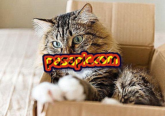 Miks kassid soovivad kastidesse sattuda