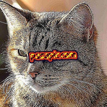 Як вибрати корм для кішки з нирковою недостатністю