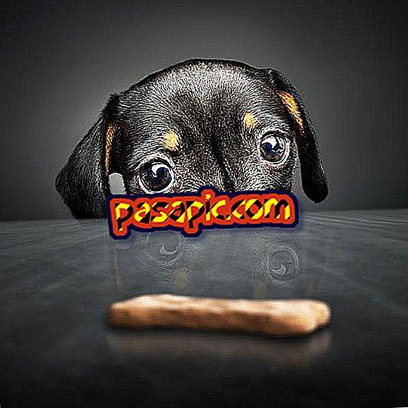 Sådan laver du cookies for nemme hunde