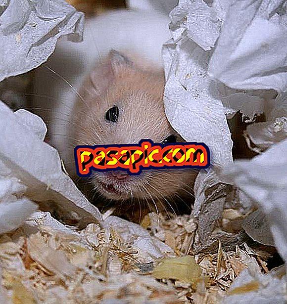 Hur man hittar min hamster