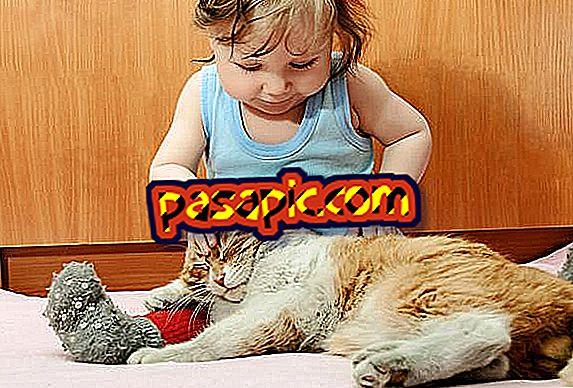 Por que os gatos dormem em cima dos donos?