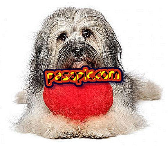 犬の心臓肥大の原因と治療