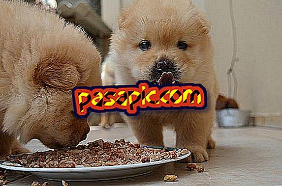 Mida teha, kui mu koer ei toitu toiduks