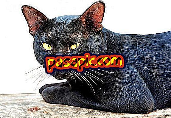 Како се бринути за мачку са шугом