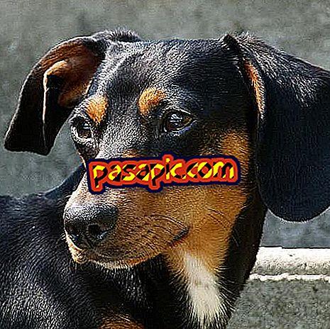 Як дізнатися, якщо моя собака підкреслена