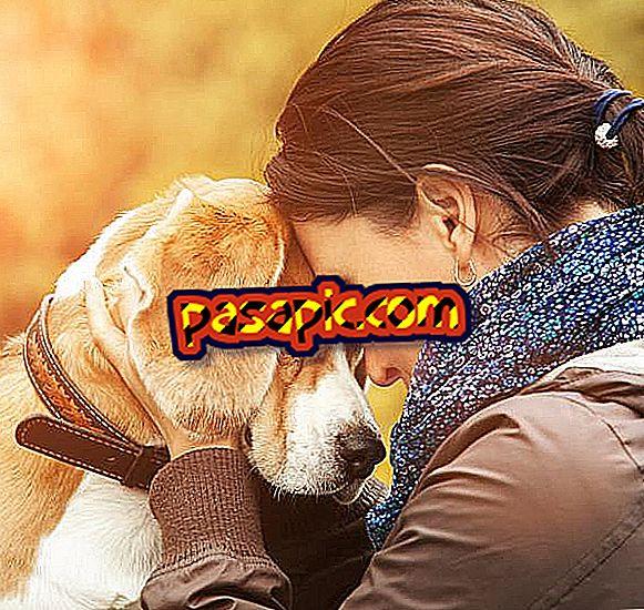 I cani provano emozioni umane?