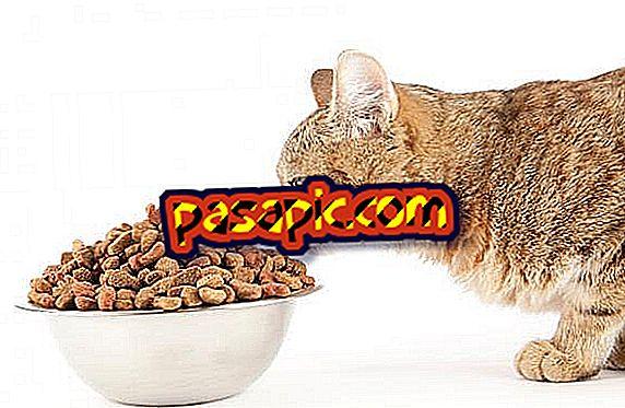 Zašto moja mačka ne jede