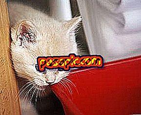 Kako narediti mačko manj agresivno