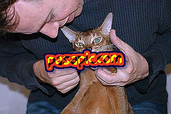 Bagaimana Hendak Membersihkan Gigi Kucing Saya