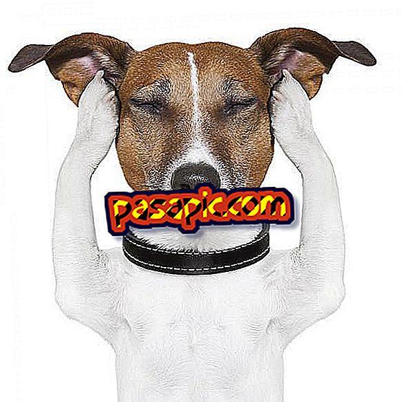 Home lijekova za otitis u pasa