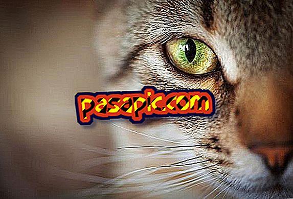 Symptomer på glaukom hos katte