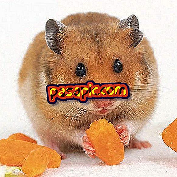 Milliseid köögivilju saab mu hamster süüa?