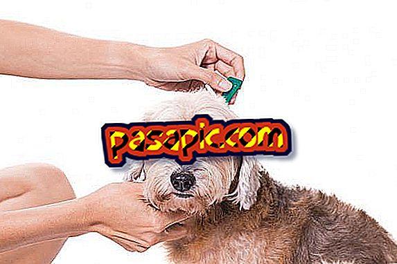 Wie man eine selbstgemachte Pipette für Hunde herstellt