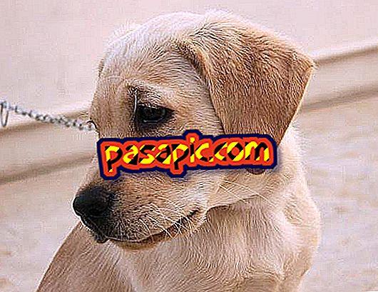 Hogyan kezeljük a depressziót kutyákban