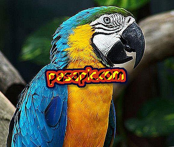Kako znati je li moj papagaj muški ili ženski