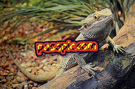Come prendersi cura di un drago barbuto - tutto ciò che devi sapere