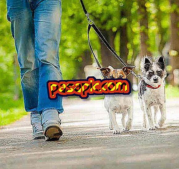 Ako si vybrať vodítko psa