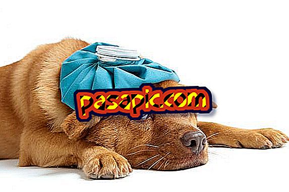 Kokie yra šunų gastroenterito simptomai