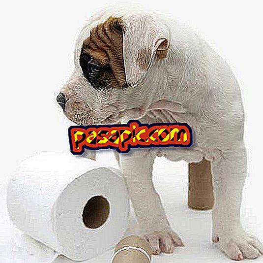 Кућна средства за констипацију код паса
