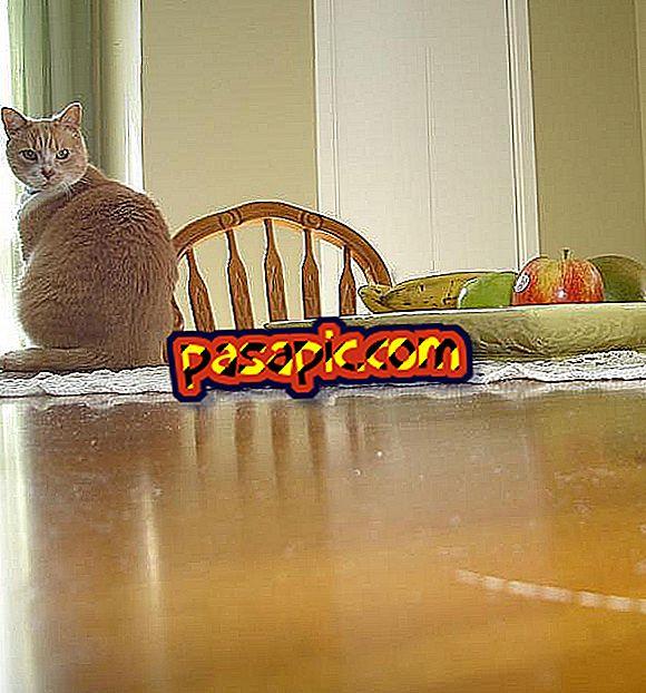 Hvordan lære en katt å ikke klø på møbler