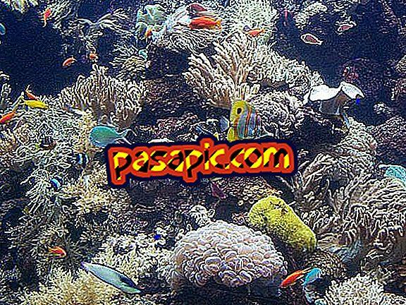 كيفية رعاية الأسماك الاستوائية