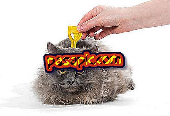 Hur pipetten används för katter