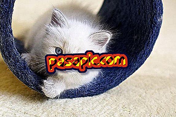 Est-ce que l'aloe vera est mauvais pour les chats?  - Découvrez la réponse ici