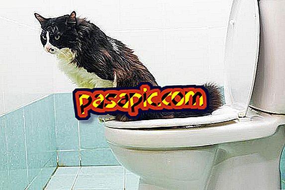 Як тренувати мого кота, щоб піти у ванну