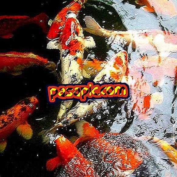 Come fare un vivaio di pesce