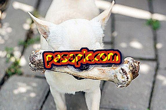 Да ли су сирове кости добре за псе?  - Знам одговор овде