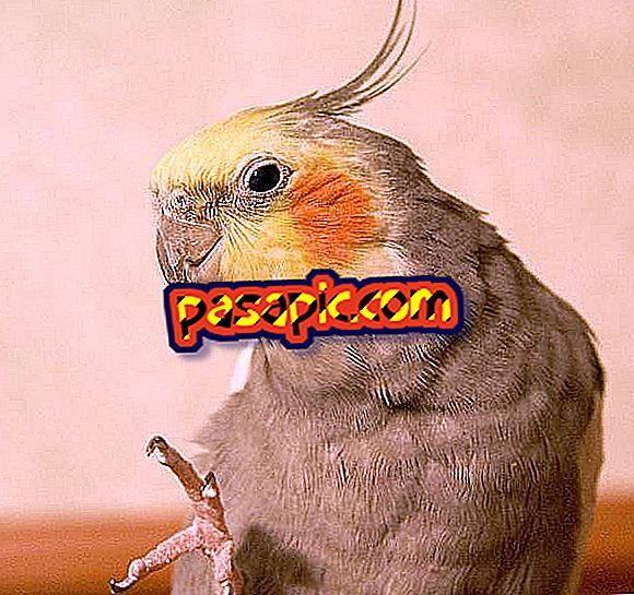 Miten estän lintuni ongelmasta nokkaan ja kynsiin