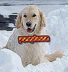 Come andare con il mio cane sulla neve