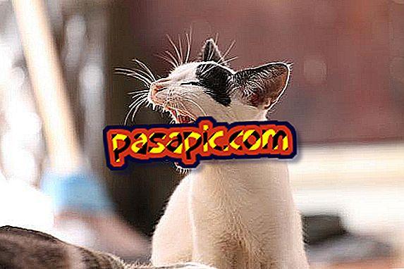 pierderea în greutate din los gatos)